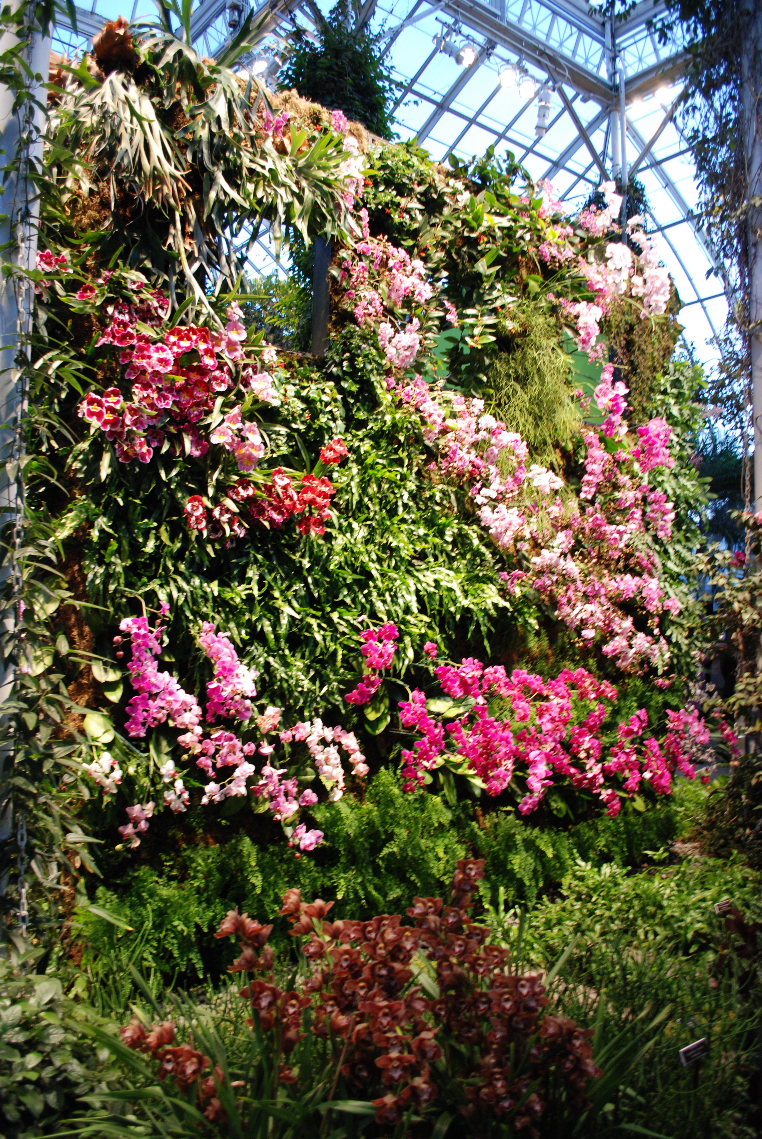 New York Botanical Garden Orchid Show Daedalus Design And Production Inc