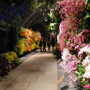 New York Botanical Garden Orchid Show